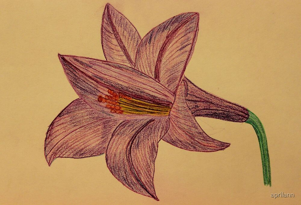 The Lily by aprilann