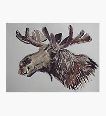 'Moose' Photographic Print