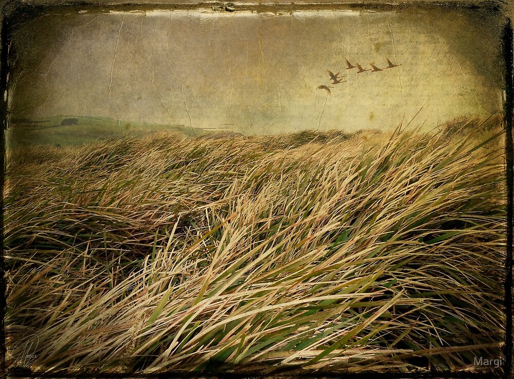 Windy Day Revisited by Margi