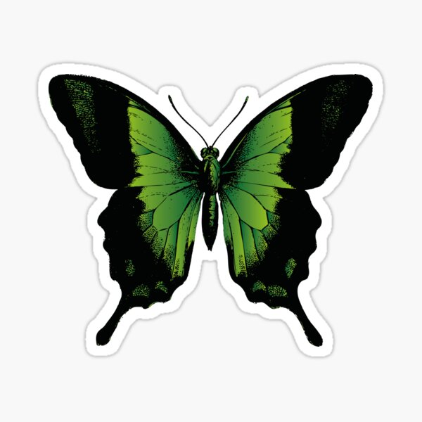 Green Butterfly | Vintage Butterfly | Green and Black | Sticker