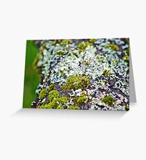 Moss 3 Greeting Card