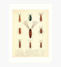 Aid to the identification of insects Charles Owen Waterhouse 1890 V1 V2 144 Various Art Print