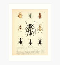 Aid to the identification of insects Charles Owen Waterhouse 1890 V1 V2 148 Various Art Print