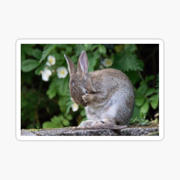 Cute Bunny Rabbit Sticker