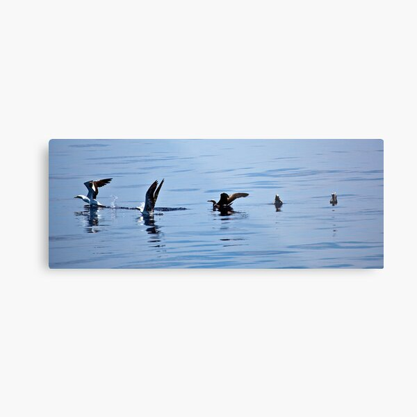 In synch Metal Print