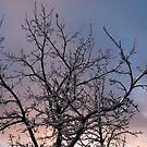 Ice Storm 2013 -  Icy Branches Sunset by Georgia Mizuleva