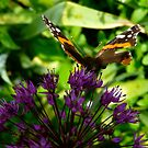 Ready to Fly Butterfly by Amy Herrfurth