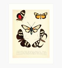 Aid to the identification of insects Charles Owen Waterhouse 1890 V1 V2 154 Various Art Print