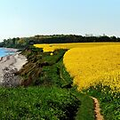 Rapeseed fields on the cliff in spring by jchanders