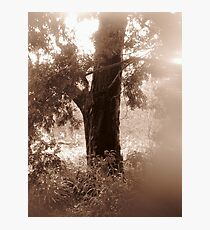 In the Garden of Love Photographic Print