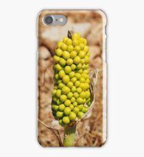 Dragon Lily seed head, Halki iPhone Case/Skin