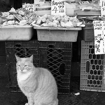 Fishmarket Cat by macstrat
