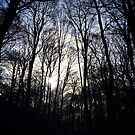 Winter Woodland Walk by Natalie Broome