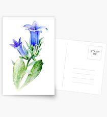 Campanula blue bell flower watercolor Postcards