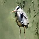 Heron Egret Bird by David Dehner