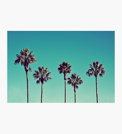 California Palm Trees Photographic Print