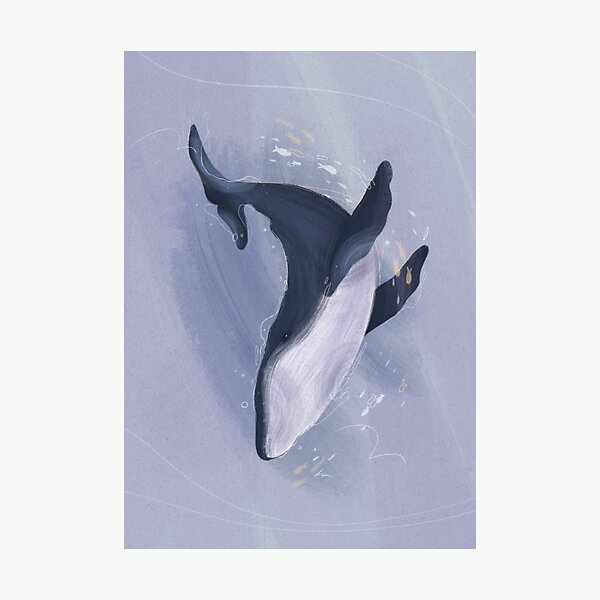 Whale Poster Photographic Print