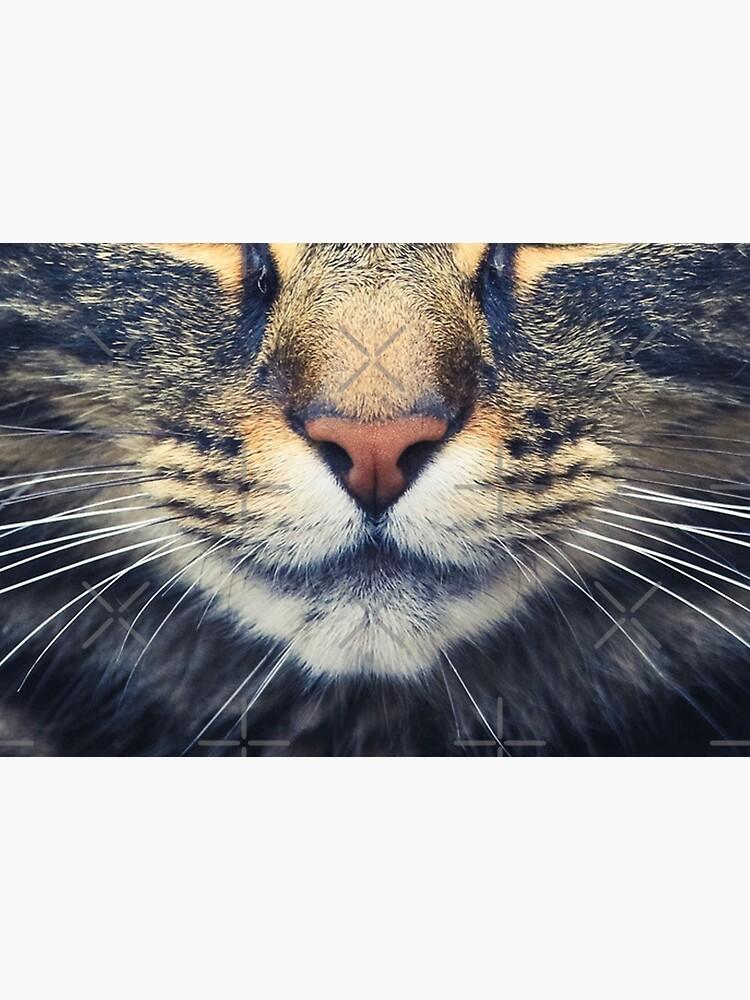 Realistic Cat Face by xyanila