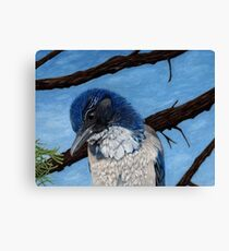 Pretty Western Scrub Jay Bird Canvas Print