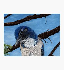Pretty Western Scrub Jay Bird Photographic Print