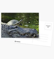 Alligator and Turtle, As Is Postcards