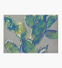 Plein Air Cactus (pastel) Photographic Print