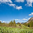 Meadow of False Hellebore by Jeff Goulden