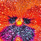 Vivid Orange Pansy in HDR by Tori Snow