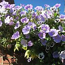 Mauve Is Pretty! Hanging Basket by BlueMoonRose