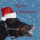 Funny Christmas Pony  by Patricia Barmatz