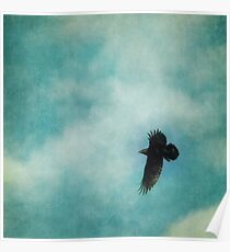 Cloudy spring sky with a soaring raven  Poster