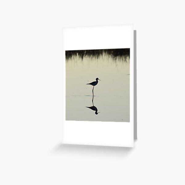 Black-winged Stilt Greeting Card