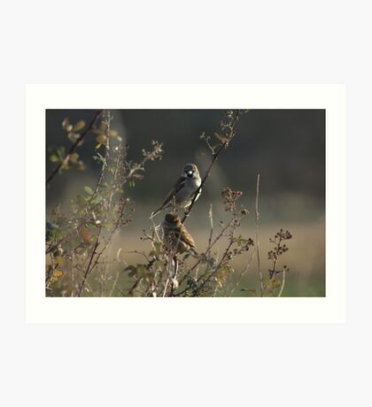 Two Finches Art Print