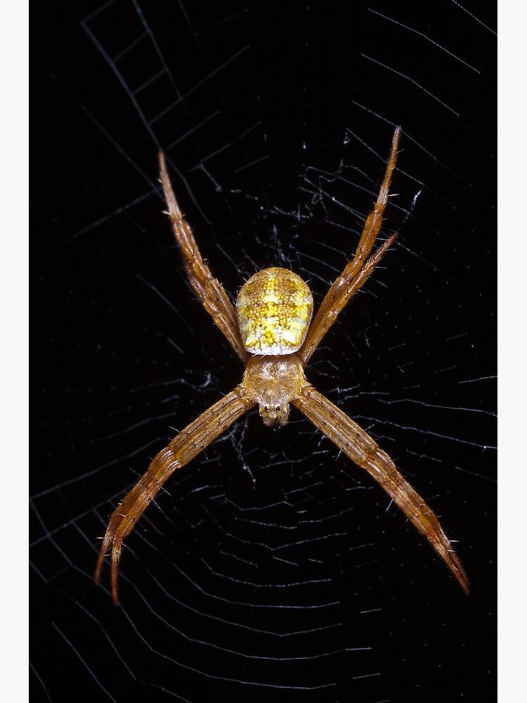 Mystery spider by DavidWachenfeld