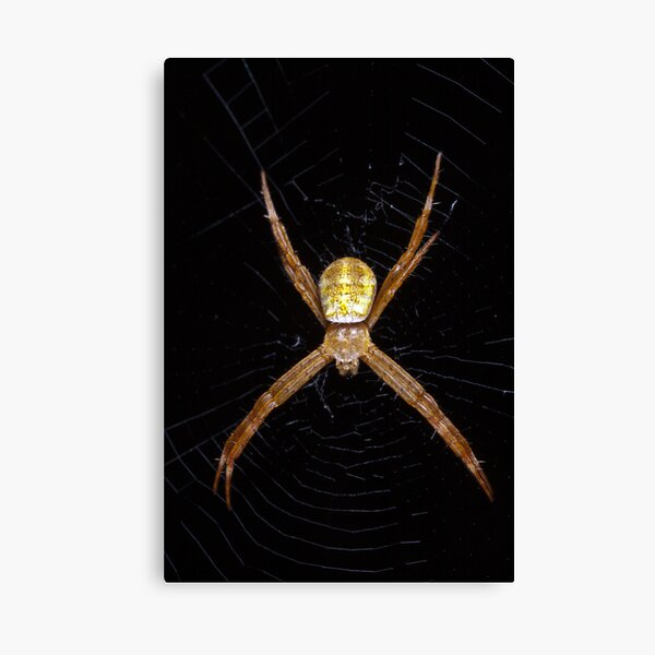 Mystery spider Canvas Print