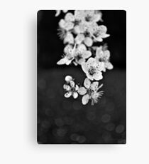 greay spring blossom Canvas Print