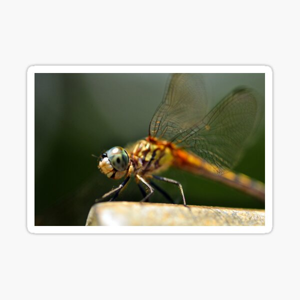 Yes, I Love Dragonflies Sticker