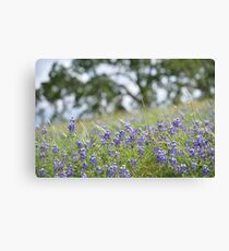 Lupin Meadow Canvas Print