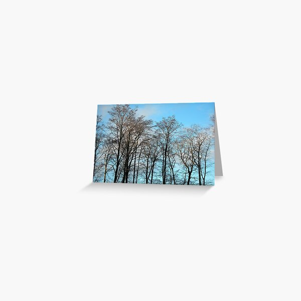 Tarradale Trees Greeting Card