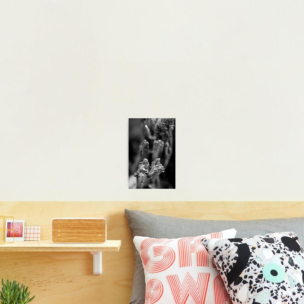 Reaching Photographic Print