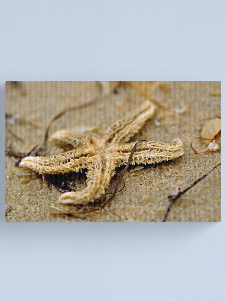 Alternate view of Washed Up Canvas Print