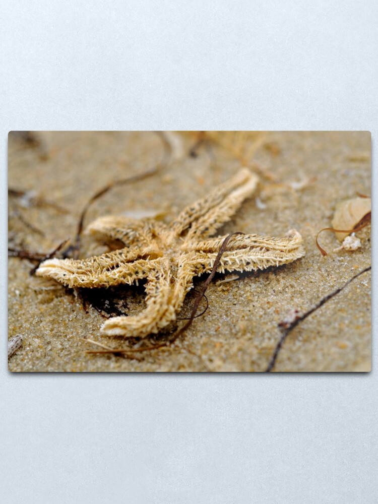 Alternate view of Washed Up Metal Print