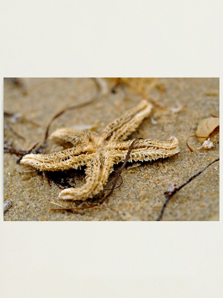 Alternate view of Washed Up Photographic Print