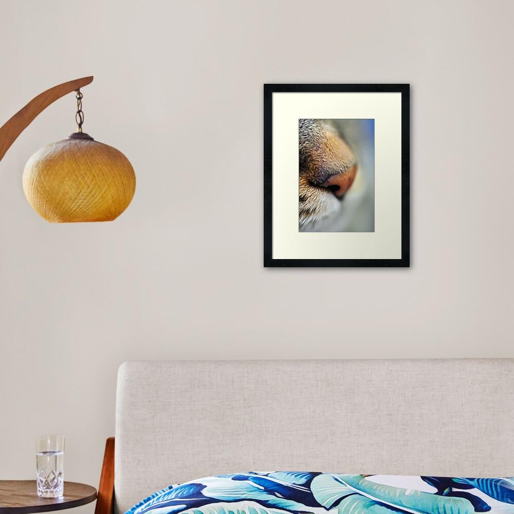 Tabby Nose Framed Art Print