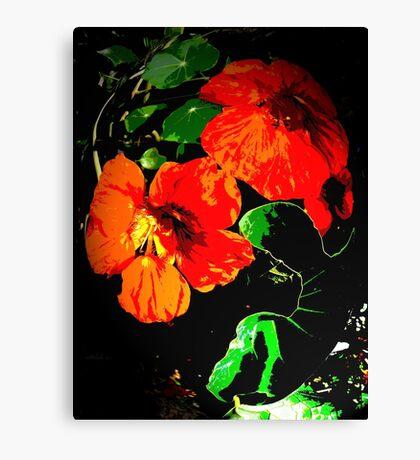 Red Nasturtiums Canvas Print