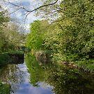 Oldbridge Canal  by Martina Fagan