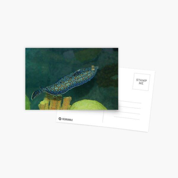 Flounder Postcard