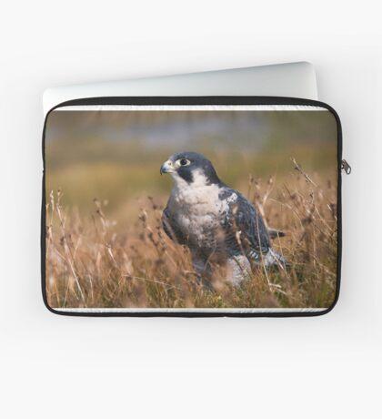 Peregrine Falcon close-up Laptop Sleeve