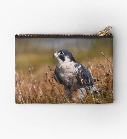 Peregrine Falcon close-up Studio Pouch