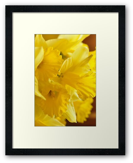 Daffodils, As Is by Kim McClain Gregal
